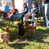 Backyard Chickens with the Guildford Kitchen Gardeners