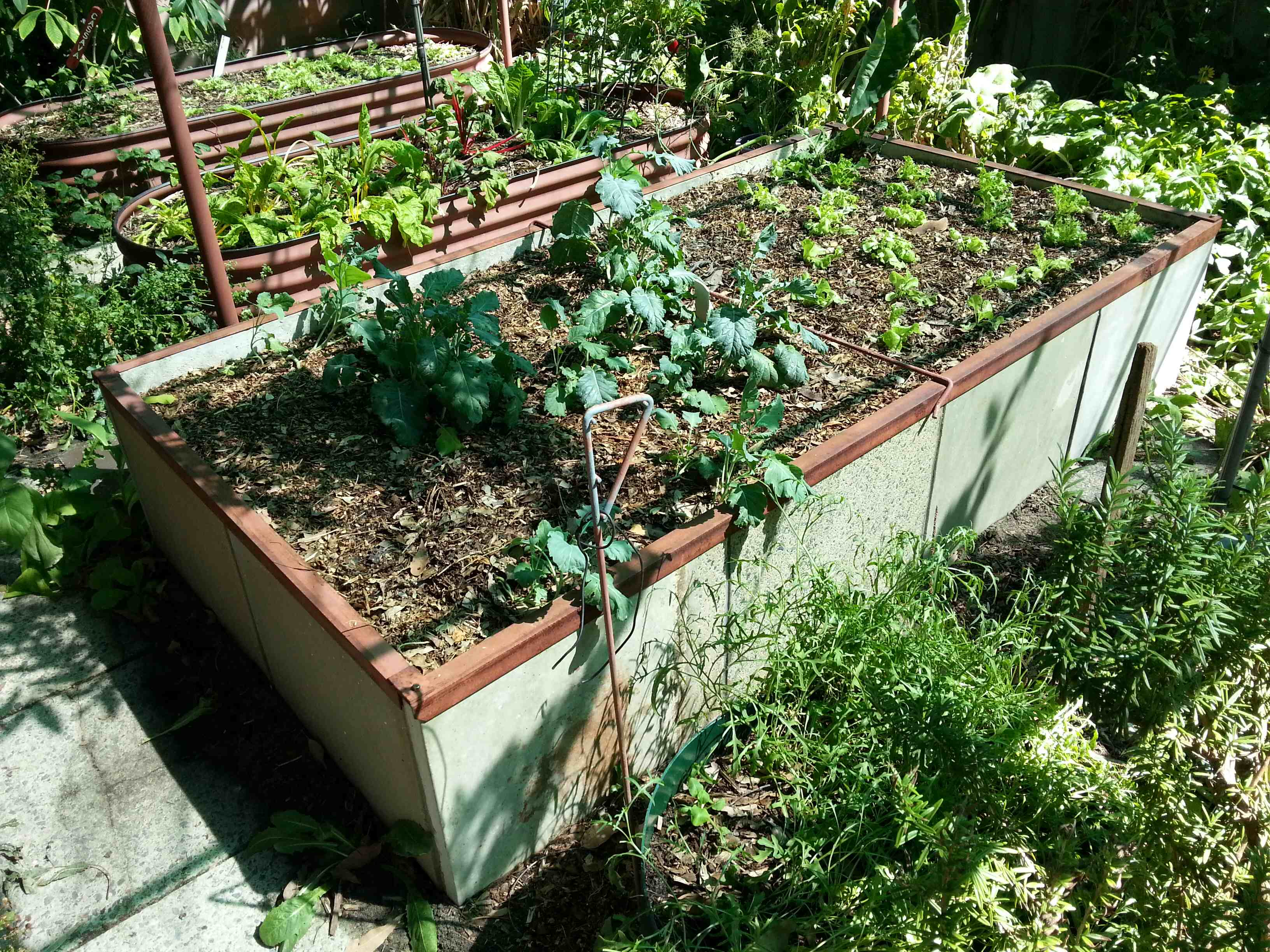 Cement Raised Flower Beds : Raised vegetable garden beds on concrete wood vs