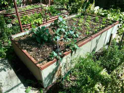Dario's raised beds made of left over concrete slabs and a metal frame