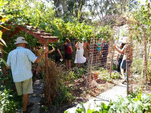 Touring the chook pen and garden