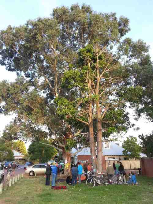 Local residents enjoy getting to know each other while taking a stand for public trees