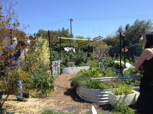 Extensive food garden including veggies, herbs, fruit trees, chooks, various composting operations