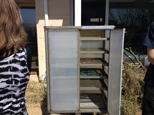 Solar food dehydrator today drying mushrooms and thyme